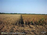 Fazenda aberta de 1.106 ha no asfalto, pronta para soja, milho, arroz, feijão, boi ou eucalipto