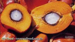 Óleo de Dende/Azeite de Dende 100% Puro / Crude Palm Oil