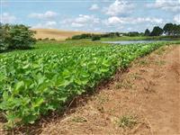 Fazenda Vacaria - RS