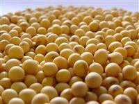 Gesso Líquido - Fertilizante Fonte de Enxofre e Calcio (Reduz Saturação Solo)