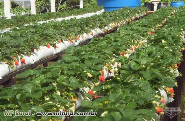 Turfa Líquida Agrícola (extraída da LEONARDITA AUSTRALIANA)