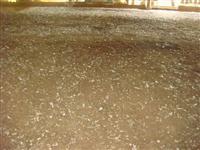 Vendo cama de frango na região de Sete Lagoas MG