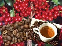 CAFÉ TORRADO E MOIDO (direto do produtor)