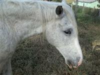 Cavalo para Equoterapia