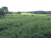 Fazenda Ouro Branco