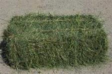 FENO de tifton, grama e massai