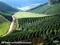 Fazenda em Minas