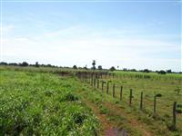 Fazenda 41.000 has no MT - Porteira Fechada