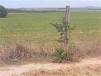 Fazenda no Município de Paranatinga -MT com  26000ha