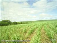Fazenda em Marilia - SP com 242 hectares