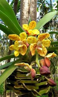Orquídeas (plantas adultas, mudas e adubos)!