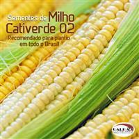 Sementes de milho Cativerde 02 - Pamonha, Milho Verde e Silagem