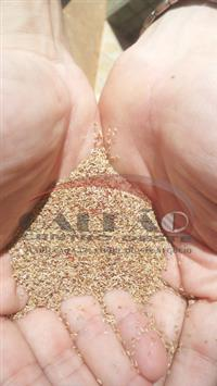 Sementes de Capim Vaquero TROPICAL (70% CD90160 + 30% Bermudagrass) - Semelhante ao Tifton