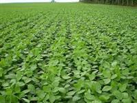 Fazenda 695 hectare /soja para venda na beira do asfalto - Tupanciretã/RS
