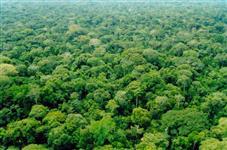 Área em reserva ambiental para compensação bioma Amazônia