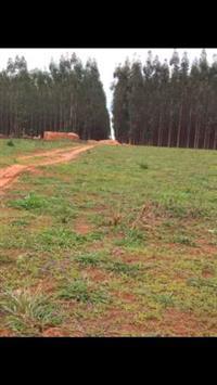 carvão 100% eucalipto legalizado. floresta própria