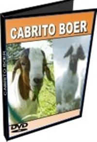 Cabrito Bôer - DVD