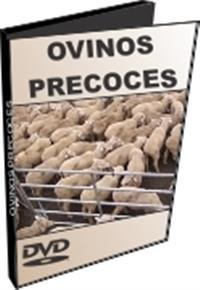 Ovinos Precoces - DVD