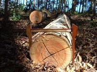 Vende-se Toras de Eucalipto ( Eucalyptus) com diametro de 25 a 60cm