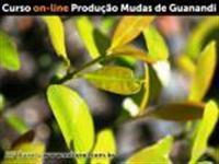 Curso de Produção de Guanandi.