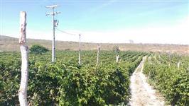 Fazenda de café e maracujá e pecuária 2 poços de água mineral