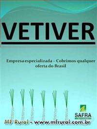 MUDAS DE VETIVER - COBRIMOS QUALQUER OFERTA DO BRASIL - EMPRESA ESPECIALIZADA,MUDAS DE VETIVER