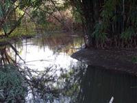 Sitio em  Mogi Mirim - SP com 12 hectares