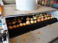 Máquinas para beneficiamento e classificação de Frutas e Legumes