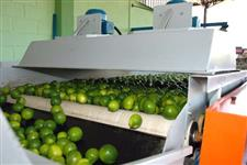 Máquinas para beneficiamento de frutas, legumes e hortaliças