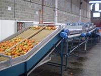 Maquinas para beneficiamento de frutas, legumes e hortaliças