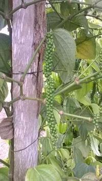 Fertilizantes - Molibdenio - cobre - etc