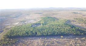 Carvão vegetal de eucalipto Tipo Exportação! conforme nescessidade