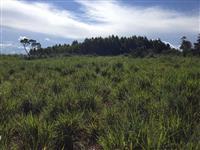 FAZENDA OLHO D´ÁGUA - 20 alqueires, semi-plana, área de chapada - próximo a São João d´Aliança (GO)