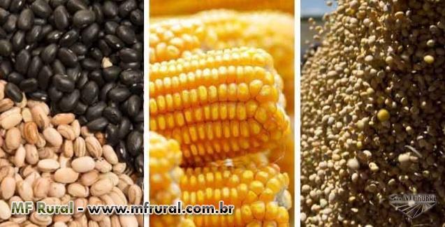 Corretor de Cereais/Soja/Milho/Feijão