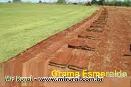 GRAMAS ESMERALDA