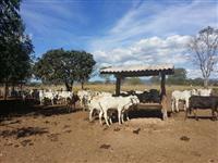 Excelente Fazenda para Pecuaria e Plantio com muita agua as margens do rio Claro