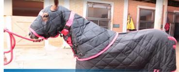 Capa para cavalo e pescoceira forrada com cobertor alta tecnologia e qualidade
