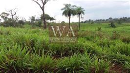 Fazenda de alto padrão para engorda de bois no Tocantins