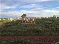 Fazenda pronta para pecuária na região de Paraíso do Tocantins