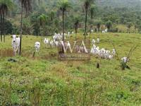 Fazenda toda formada em pastagens e montada para pecuária na região de Colméia Tocantins