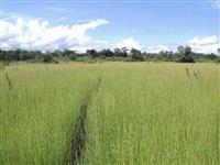 Fazenda no vale do Araguaia no Tocantins