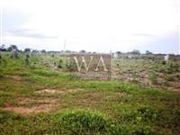 Fazenda espetacular em região com plena valorização em Crixás -Tocantins