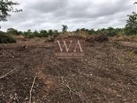Fazenda com venda urgente na região do vale do Araguaia