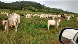 Fazenda excelente para pecuária de cria e engorda em Vila Rica-MT