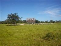 Fazenda de (3.499 há) em Itapecuru Mirim-MA