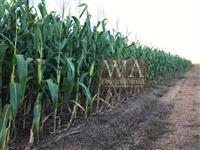 Fazenda plantando soja no Vale do Araguaia