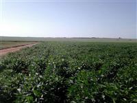 Fazenda Região de Aporé