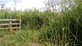 Fazenda no sul do Pará barata