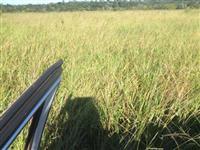 Fazenda no Mato Grosso Vendo urgente