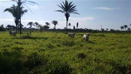 Fazendo no Pará vende ou troca urgente!